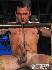 Captive Male Picture