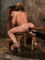 Hogtied Picture